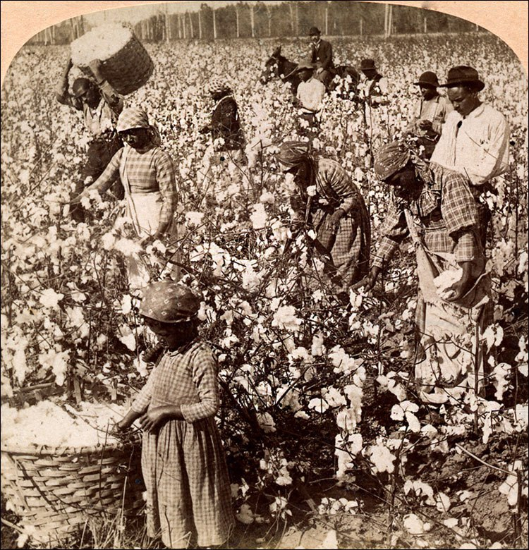 history of cotton in india